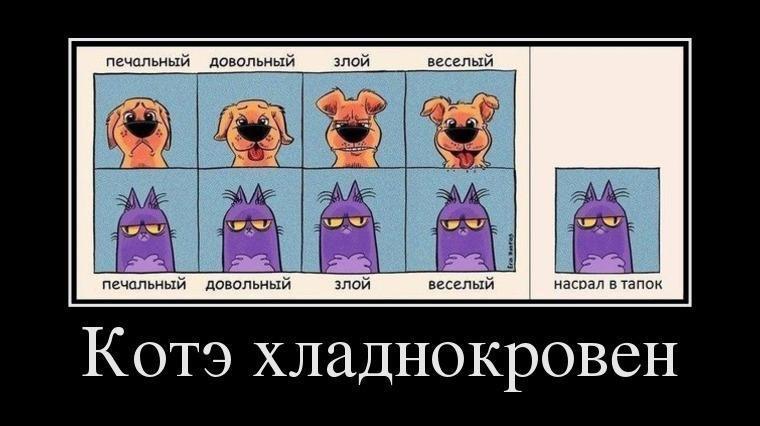 Демотиваторы про КотЭ (16-02-2013)
