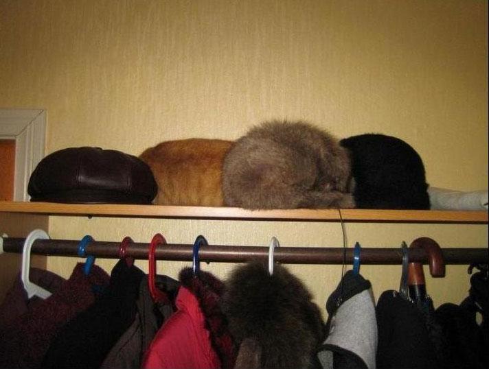 Тест на внимательность. Найди кота (7 фото)