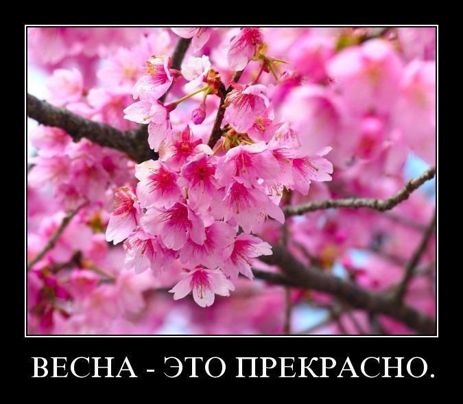 Демотиваторы о весне