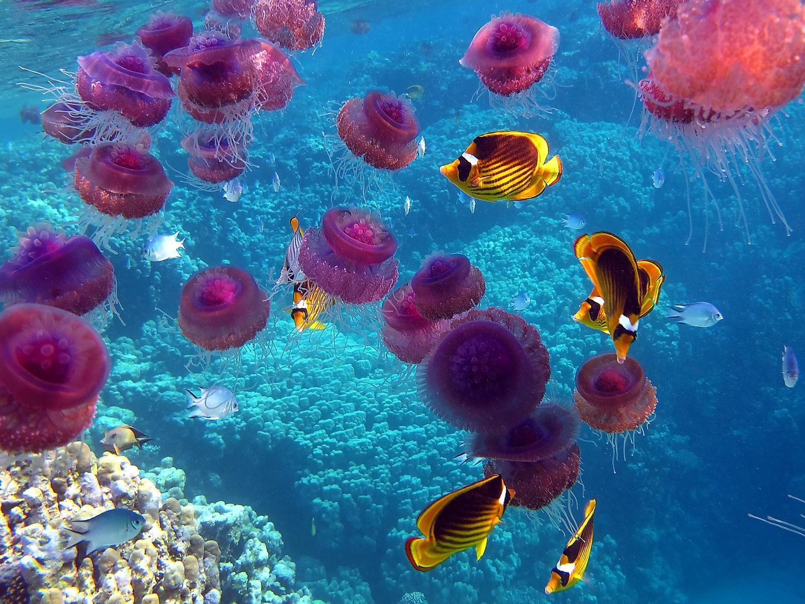 Подводный мир обои для рабочего стола